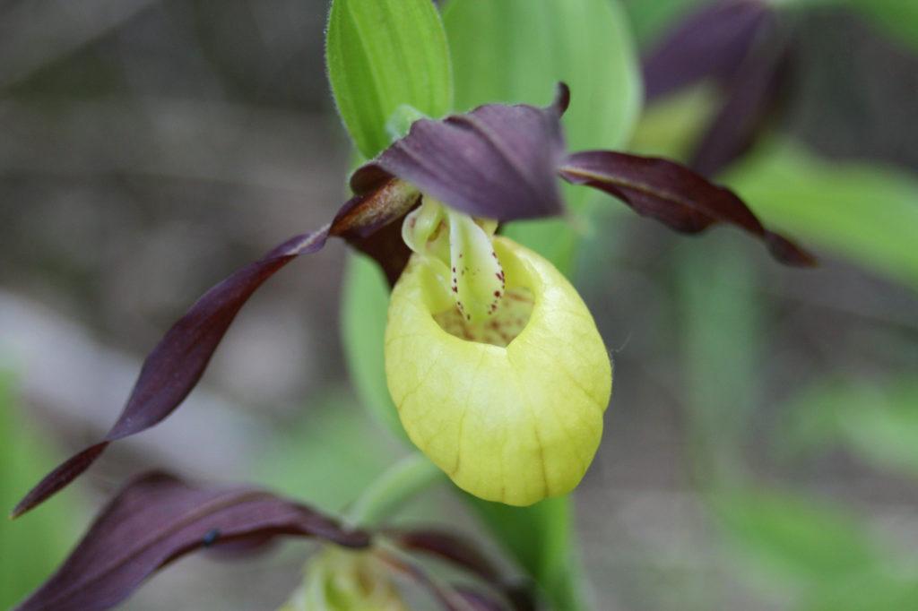 Mis on seost sussikottidel ja aasta 2018 orhideel?
